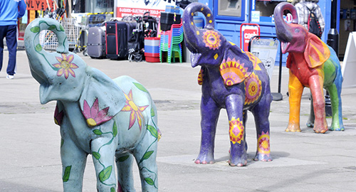 The Bolton Elephants Picture by Richard Holton Newsquest(Bolton)
